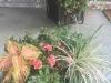 Indianapolis Planters