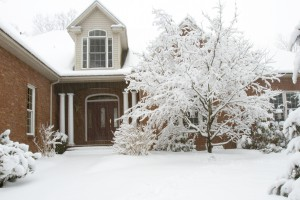 Protect landscaping in winter