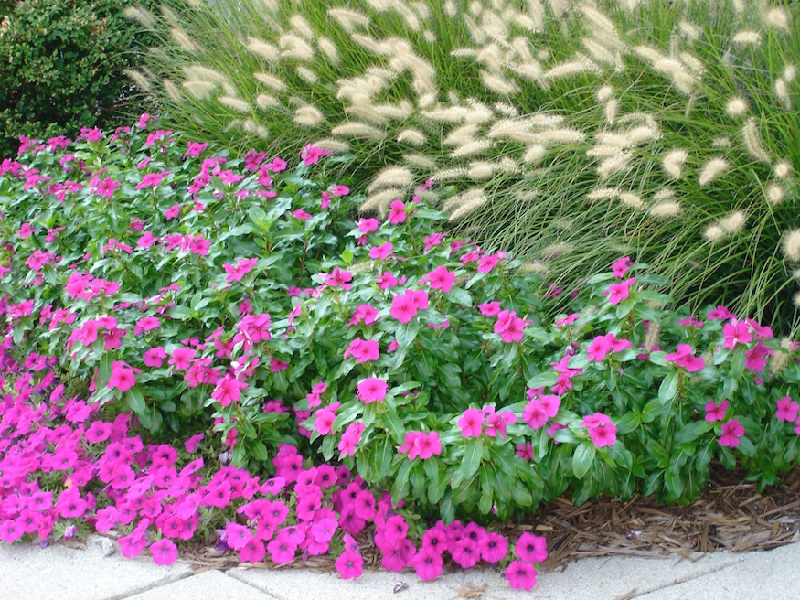 Annuals Amp Planters Indianapolis Landscape Company All